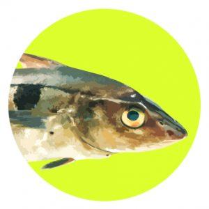 rond-eglefin